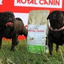 posando junto al saco de pienso especifico para el Carlino, marca Royal Canin