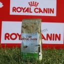 Saco de pienso especifico para el Carlino, marca Royal Canin