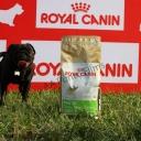 Vinny posando junto al saco de pienso especifico para el Carlino, marca Royal Canin